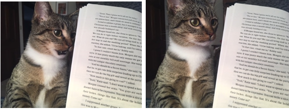 Ripley the cat sneering at a paperback book