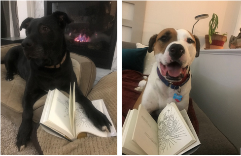 Two pictures of dogs laying on the couch next with books