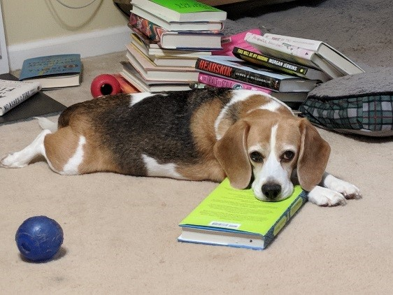 Bailey the dog with his head on a book, pouting