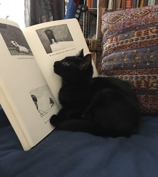 A picture of a kitten reading a book